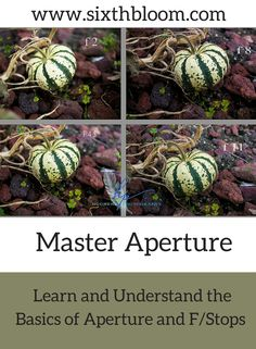Master Aperture and Understand f/Stop