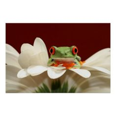 >>>Smart Deals for          red eyed tree frog poster           red eyed tree frog poster This site is will advise you where to buyThis Deals          red eyed tree frog poster lowest price Fast Shipping and save your money Now!!...Cleck Hot Deals >>> http://www.zazzle.com/red_eyed_tree_frog_poster-228028471921415319?rf=238627982471231924&zbar=1&tc=terrest