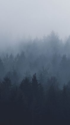 We've started a new post series in which every week we'll share 5 new wallpapers that we think would look perfect on your phone. Forest Wallpaper, New Wallpaper, Nature Wallpaper, Foggy Forest, Dark Forest, Nature Aesthetic, All Nature, Dark Photography, Landscape Photography