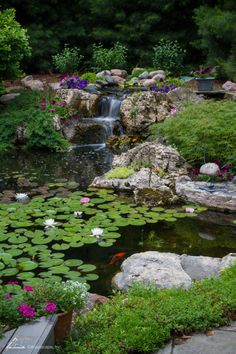 Ecosystem ponds work with nature, not against it. It provides an all-natural, low-maintenance piece of paradise. Each component of the ecosystem pond plays a key role in keeping ponds balanced, clean and clear. Backyard Stream, Backyard Water Feature, Ponds Backyard, Backyard Waterfalls, Garden Ponds, Koi Ponds, Natural Landscaping, Pond Landscaping, Landscaping Company