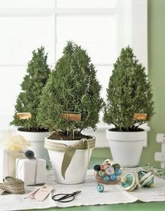Rosemary Trees | 40 DIY Home Decor Ideas That Aren't Just For Christmas