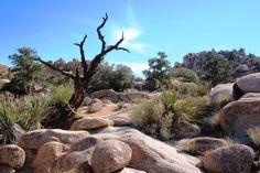 Joshua tree park Places Ive Been, Rocks, To Go, Earth, Plants, Travel, Viajes, Destinations, Stone