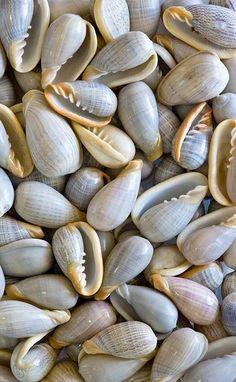 Beautiful blue shells.