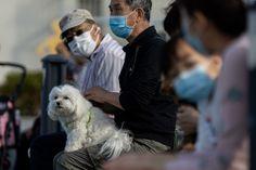 Hong Kong warns residents not to kiss pets after dog contracts coronavirus Chinese Social Media, Pet Dogs, Pets, Pet Health, Pomeranian, The Guardian, Hong Kong, Your Pet, World