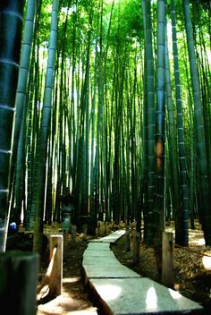 To know more about 鎌倉 報国寺, visit Sumally, a social network that gathers together all the wanted things in the world! Featuring over 605 other 鎌倉 items too! Bamboo Landscape, Japanese Landscape, Green Landscape, Bamboo Garden, Places Around The World, Around The Worlds, Grass Type Pokemon, Geisha, Japan Architecture