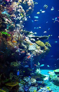 """lifeunderthewaves: """"Riff View by KWChewAlan Shot at SEA Aquarium, Sentosa…"""