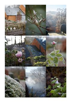 Garden Design / Winter Garden