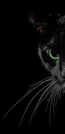 Beautiful Black Cat!
