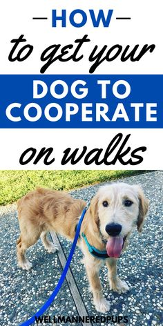Dog walking tips every new dog owner should know - How to get your dog to cooperate on walks.