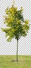 texture tree leaves alpha masked isolated