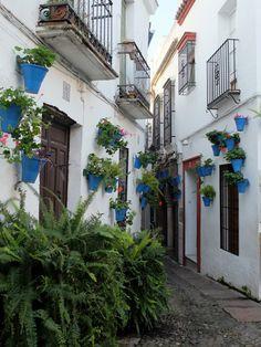 Calle des Las Flores (Cordoue / Andalousie / Espagne)