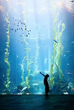 I want so many amazing aquariums in my house someday...this might be impossible, but it's still beautiful.