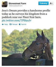 Jess's Dream, (AKA Taco, the son of Horses of the Year Curlin and Rachel Alexandra) chilling out at Stonestreet Farm.