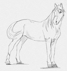 Как нарисовать лошадь карандашом - Грация, утонченность и сила - вот, что можно сказать о лошадях. Теперь понятно, почему многие люди стараются их нарисовать с разных ракурсов и в разных ситуациях. В этом уроке рисования лошади мы приведем пример создания рисунка