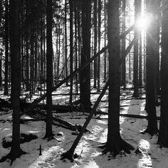 Tätä sommitelmaa joutui oikein hakemalla hakemaan. Kolmiot ovat klassisen tyylikkäitä valokuvissa vai onko toi sittenkin nelonen? #blackandwhite #spring #triangle #composition #forest #nature #sunshine #sunbeam