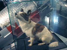 Astronaut Museum, Moscow - Soviet space dog cosmonaut Strelka (Sputnik 5, 1960)