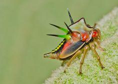 membracidae | Membrácidos .Estos animalitos se les llama salta arboles y viven en ...