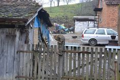 Village Ljutice in Serbia; cats are unavoidable in the yard, they have their own role