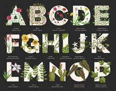 "Check out this @Behance project: ""PLANT ALPHABET ABECEDARIO DE PLANTAS"" https://www.behance.net/gallery/50771411/PLANT-ALPHABET-ABECEDARIO-DE-PLANTAS"