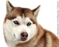 Demand Justice for Dog Who Suffocated During Iditarod! | Please SIGN and share petition. Thanks.