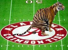 bama is worse than tiger crap Clemson Memes, Lsu Vs Bama, Alabama Memes, Lsu Tigers Football, Football Memes, Auburn Tigers, Alabama Football, Alabama Tennessee, College Football