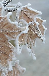 Winter's Delicate Touch, Gentle Winter