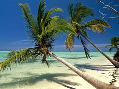Palm trees dot the landscape, and Punta Cana is one of the most beautiful areas of the Dominican Republic. Natur Wallpaper, Beach Wallpaper, Tropical Wallpaper, Summer Wallpaper, Hd Wallpaper, Punta Cana Beach, Destin Beach, Punta Cana Strand, Most Beautiful Beaches