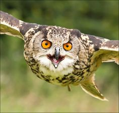 Incoming! (by Phil Selby) via Flickr.