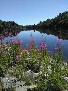 Beautiful river and flowers gift's natures Dear World, River, Mountains, Nature, Flowers, Outdoor, Beautiful, Outdoors, Naturaleza
