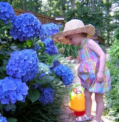 Definitely going to plant at least one mophead variety of hydrangea bush in a sunny part of our yard