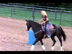 Exercise for an Aggressive Horse