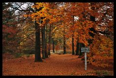Nature in Haarle, Netherlands (autumn sprengenberg wb) - a photo by Wimage