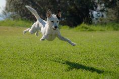 Krásná zahrada a pes. Jde to dohromady? #dog #garden #pesnazahrade #home #spokojenypes #womanandstylecz Dog Photos, Dog Pictures, Forever Puppy, Jumping Dog, Silly Dogs, Free Dogs, Pet Life, Pet Store, Dog Friends