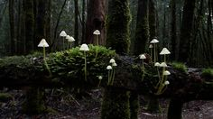 Moss and mushrooms -