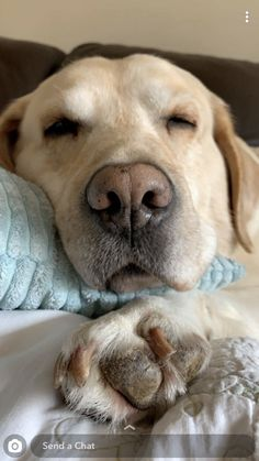 Cute Dogs And Puppies, I Love Dogs, Doggies, Cute Funny Animals, Funny Dogs, Sleepy Dogs, Golden Puppy, Puppy Pictures, Happy Dogs