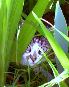 How to Find a Lost Cat