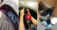 Alertée par des miaulements s'échappant de son véhicule, une jeune femme s'est empressée de se rendre chez son concessionnaire Hyundai, en Virginie (Etats-Unis). Et grâce à elle, le destin de l'animal a basculé…