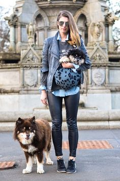 Thankfifi : The truth about owning 2 finnish lapphunds...