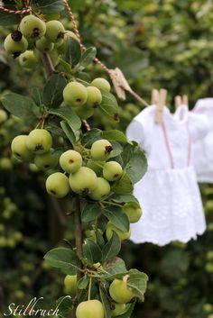 Farm Cottage, White Cottage, Cottage Chic, Swedish Cottage, Apple Farm, Apple Orchard, Apple Garden, Style Retro, Down On The Farm