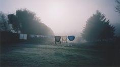 sunrise through morning mists