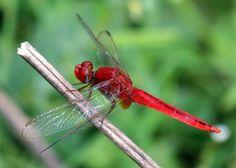 The Dragonfly Leader « LivingLeadership