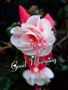 Good Morning Sunday Images, Good Morning Images Flowers, Good Morning Beautiful Images, Good Morning Cards, Good Morning Happy, Good Morning Picture, Good Night Image, Morning Pictures, Happy Sunday