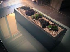 Succulents.  Little_Garden