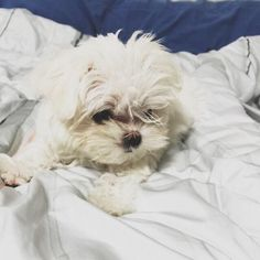 [© owner] got7s new dog, coco