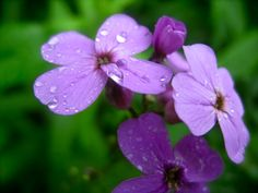 purple flowers I snapped pics of last summer (own work)