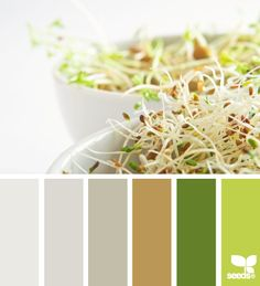 sprouting tones: search by color value, find a palette!