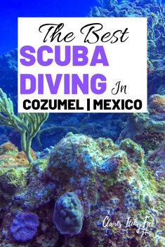 Looking for the best diving in Cozumel Mexico? Cozumel Mexico had world class diving and with so many companies to choose from it can be hard finding the best diving in Cozumel. Take a read of my experience scuba diving in Cozumel Mexico. Cozumel Scuba Diving, Best Scuba Diving, Scuba Diving Gear, Cave Diving, Snorkeling, Vallarta Mexico, Cozumel Mexico, Mexico Resorts, Cabo San Lucas