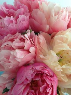 Flowers Nature, Beautiful Flowers, Pink Peonies, Peony, Garden Inspiration, Colour Inspiration, Flower Power, Flower Pictures, Planting Flowers