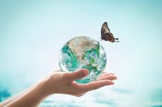 "Check out the article ""The World in Our Hands""  #environmentalism"