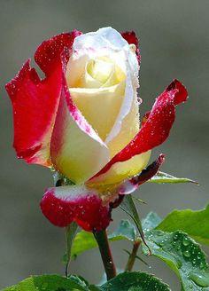 @zoumrouda @ImZatiey @patyie66 @enezetaNZ @rvh111 @takui9 @AisleyneApp @MyrellaIvan @JordaanVanessa LYDIA-MADDLNA RS